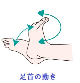 足首の動きのイラスト