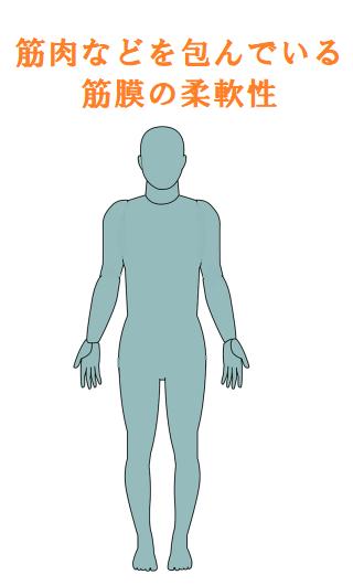 筋膜の柔軟性を高めるイラスト