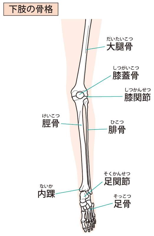 足の骨・関節のイラスト