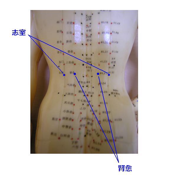 腰痛に効くツボ 腎兪と志室
