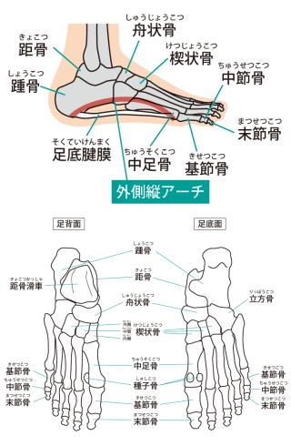足関節イラスト
