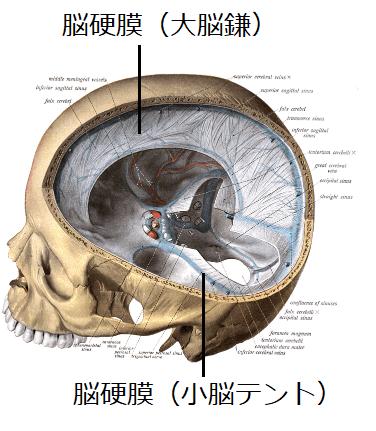 大脳鎌小脳テントイラスト
