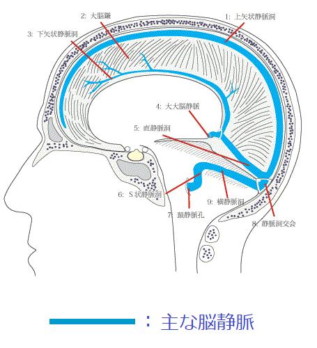 脳硬膜大脳鎌小脳テン静脈トイラスト