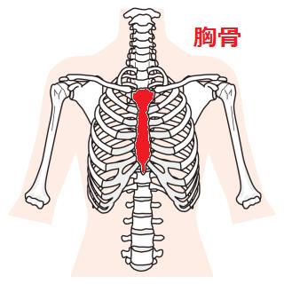 胸骨のイラスト